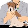 安倍晋三首相が、国家戦略特区の全国展開に言及「意欲があれば獣医学部新設を認める」