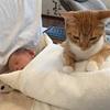 田町の愛育病院で麻酔分娩(無痛分娩)で出産したときの話①:産院選びから麻酔学級まで