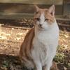 12月18日 江ノ島の猫さま と 江ノ島の情景