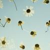 まるで押し花! 飾って飲んで楽しめるアートなハーブティー『Have a Herbal Harvest』