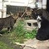 瀬戸の招き猫ミュージアムは招き猫だらけ ~せとものにゃんこ町~