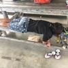【6月30日 446日目】奥武島、台風接近中!(゚ω゚)