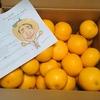 みかんのみっちゃん 和歌山有田 柑橘農家 みかん はっさく