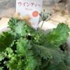 庭仕事 植物のためには何がベストなのか