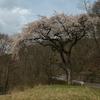 津金寺(立科町)のカタクリ山野草まつり