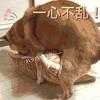 ウチの柴犬13歳に発情期がきた!犬っていつまで発情するの?