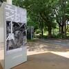 【ミラクル・エッシャー展】奇想版画家の謎を解く8つの魅力的な世界