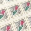 日本郵便のオリジナル切手作成サービスを利用してみたよ!