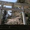 竹原神社の山桜・・