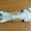 【癒やし】今日は猫の日☆「寝る子」と書いて「ねこ」そんな猫の寝姿公開