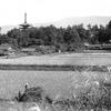 110 ①入江泰吉の郷愁の「大和路」モノクロ篇