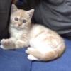 初日からリラックスモード全開の子猫が可愛い