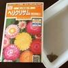 4-40   愛すべき花たち〜令和も種!タネ!!たね!!!〜