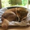 犬ベッドを追加 - A New Dog Bed