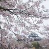 今年は桜の開花は早いというが、花見の宴会はご遠慮くださいとのこと・・