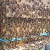 猛暑とミツバチ