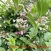 初夏の花と玄関わきの花壇