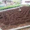 種子屋に苗を買いに行ったが、、、、生姜を植えた(笑)