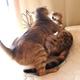 朝日の中の 猫の攻防