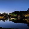昭和記念公園のイチョウ並木と日本庭園ライトアップ!めっちゃ綺麗!!