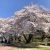 今年の桜を大放出
