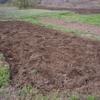 サトイモの植え付け完了です。