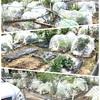 ブログ更新しました 農園 畑  おりーぶファーム  農作業について http://www.olive-jp.co