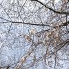 桜とスイーツ