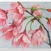 寒桜の絵が完成しました〜すっかり初夏ですが(笑)〜