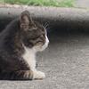 7月3日 北区「猫町」から王子周辺まで猫さま歩き とその情景
