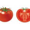 トマトのカルシウム欠乏(尾腐れ)発生メカニズムと改善策!