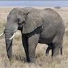 ジンバブエから象が中国に輸出に動物運動家が警告