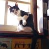 ねこレポート46「滋賀・viviNobaの看板猫3」