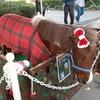 11月に開催した第56回アース・エコ・フェア浜松城公園
