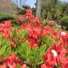 監物台樹木園の花々