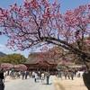 【2021】太宰府天満宮の梅(飛梅&境内)とお店~写真88枚
