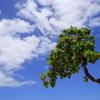 ハワイ生活費の現実は?電気代と平均世帯収入【光熱費編】