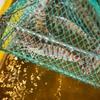 2020年8月29日 小浜漁港 お魚情報