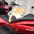 7年前、玉三郎がうちのバイクに乗った日