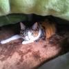 【愛猫日記】毎日アンヌさん#148