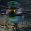【日常】水族館のため八景島シーパラダイスへ行ってきました