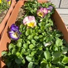 5つの花が咲いているよ^ ^