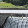 鳥撮り@昼下がりの多摩川(二ヶ領宿河原堰)コアジサシ&キアシシギ