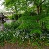 京都・黒谷 - 真如堂 新緑の頃