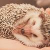 よく眠れる方法のカギは朝ごはんにあります
