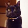 今日の黒猫モモ&白黒猫ナナの動画ー807