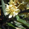 花の香りの記録について
