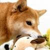 犬用夏の散歩グッズのオススメは?夏バテ対策をしよう!