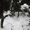 1.18.(月・雪)初雪。東証1勝9敗。琴奨菊9連勝。