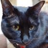 今日の黒猫モモ&白黒猫ナナの動画ー670